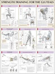 Strength Training For The Glutes Chart Hip Strengthening