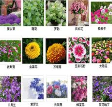 get ations summer flowers and potted flower seed packages balcony easy to plant flower seeds sowing seasons