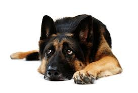 cations in canine behavior therapy