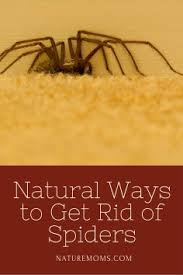 how to kill spiders in house. How To Kill Spiders In House