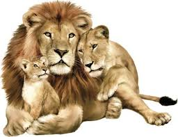 our  on safari animal wall art with safari animals wall art large life like lion with cubs wall