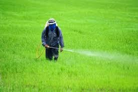 Pesticides Herbicides Chemical Fertilizers And Cancer 2