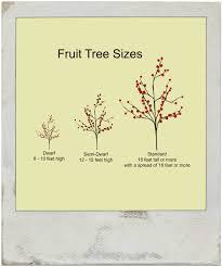 Growing Tropical Fruit In The Midwest  StatebyState Gardening Dwarf Fruit Trees Virginia