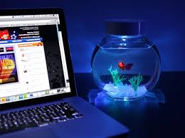 fish for office dispose boredom with ornamental fish at your desk aquarium office 1000 images