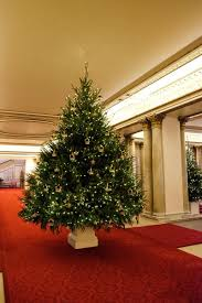 This isn't the most famous Christmas tree of the House of Windsor this year  after Prince Harry, several days after the now annual Christmas Tree Day  event, ...