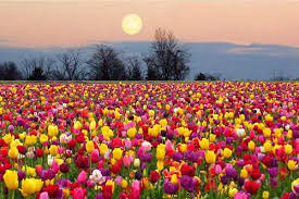 Image result for month of may flowers