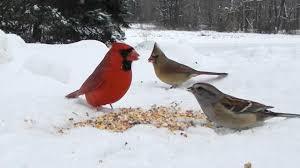 Backyard Bird Watching - Northeast Ohio - High Definition HD - YouTube