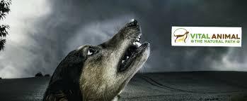 apoquel dog with a dark side