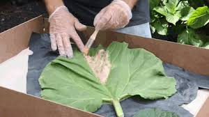 Make a Mold of a Leaf for Casting Concrete