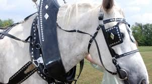 driving harness, driving lines, horse harness, buggy & work harness horse harness image at Horse Harness