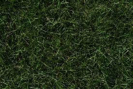seamless dark grass texture. Textures Seamless Dark Grass Texture R