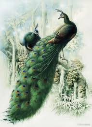 bird painting by pea bird painting bird painting