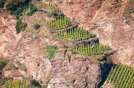 Vine Spacing Chart Why Vineyards And Vines Look Different From One Another