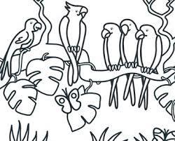 Kleurplaat Papegaaien Dieren Dieren Kleurplaten Huisdier