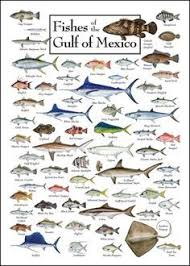 Lanzarote Fish Chart Fish Of The Gulf Of Mexico We Have This Its Great For