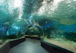 underwater water park. Image Source: Manilaoceanpark.com Underwater Water Park
