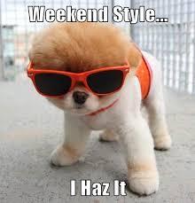Resultado de imagen para have a great weekend chihuahua gif