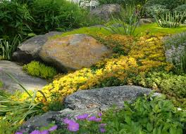Small Picture How To Design A Rock Garden Rocky Details Rock Garden Designs Rock