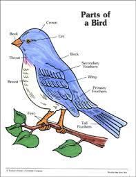 Birds Chart For Kindergarten Parts Of A Bird Labeling Practice Page Printable Skills