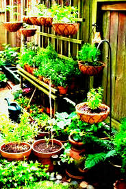 flower gardening for beginners. vegetable gardening for beginners in the philippines lavish garden ideas best container on pinterest modern flower r
