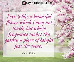 Love Flower Quotes Magnificent 48 Beautiful Flower Quotes SayingImages