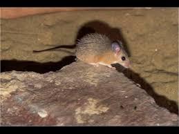 نتيجة بحث الصور عن عضة فأر
