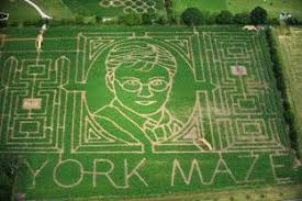 york maze. york maze goes harry potter crazy