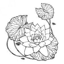 Lotus Symbool Kleurplaat Stockfotos Rechtenvrije Lotus Symbool