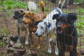 Best Outdoor Dog Kennel Design Best Outdoor Dog Kennel Smart Dog Stuff