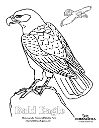 Small Picture Drawn bald eagle coloring page Pencil and in color drawn bald