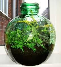 the finished result of the plant terrarium