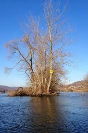 Derby Dam Tide Chart Ctfishtalk Com Housatonic River Derby Shelton 01 08