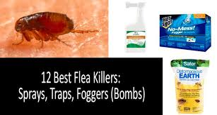fleas quickly top 12 best flea sprays traps and foggers s