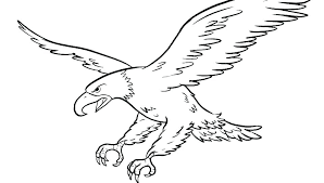 Bald Eagles Coloring Pages Eagle Drawing For Kids Chronicles Network