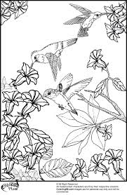 Small Picture Hummingbird Coloring Pages Minister Coloring