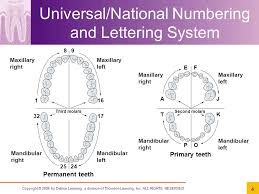dental charting systems chapter 7 dental charting ppt video online download