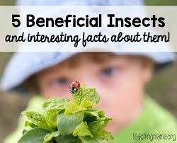 Beneficial Insects Chart 5 Beneficial Insects To Be Happy You Have Around