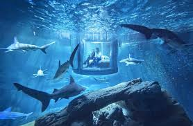 real underwater world. Beautiful World Slideshow Preview Image Intended Real Underwater World