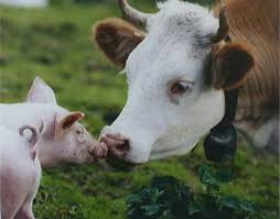 Реферат по животноводству ХитАгро ru Животноводство