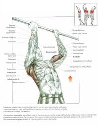 Pull Up Workout Chart The Anatomy Of Chin Ups Exercise