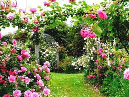Small Picture Best Of Http Www Pptbz Com Pptpic Rose Garden Design Ideas