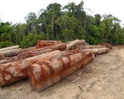 Resultado de imagem para Autoridades alertaram sobre os riscos que o projeto traz para o meio ambiente