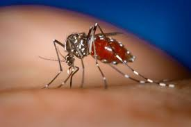 Image result for dengue drug discovery