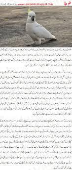 parrot information in urdu parrot urdu information about facts parrot information in urdu parrot