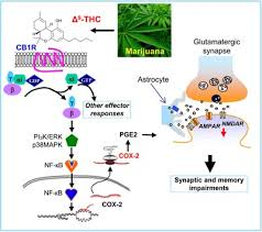 Preventing Marijuana Induced Memory Problems With Otc