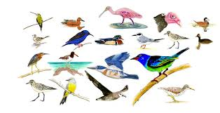 How Many Birds Are In North America Bird Species In North