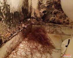 black mold and mycelium growth