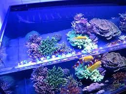 lamp stack developer lamps plus san go code sept 2017 reef tank lighting reviews aquarium