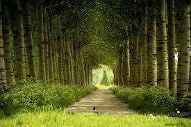 hd photography nature. Perfect Nature Nature Photography Forest With Hd Photography Nature