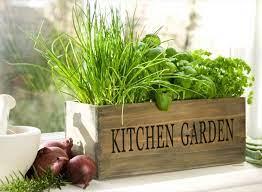 make herb garden on your window sill